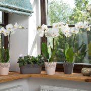 Okenní parapety – čím je ozdobit?